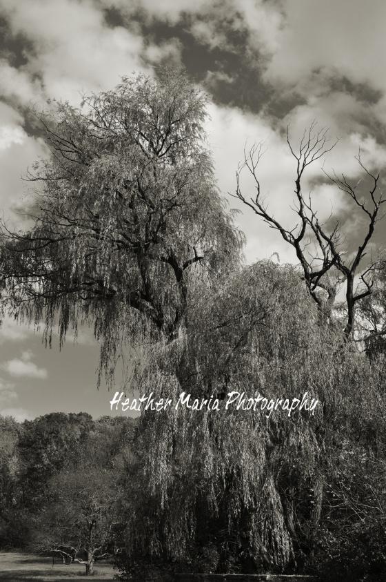 platinum fall mystical trees