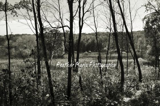 platinum woods